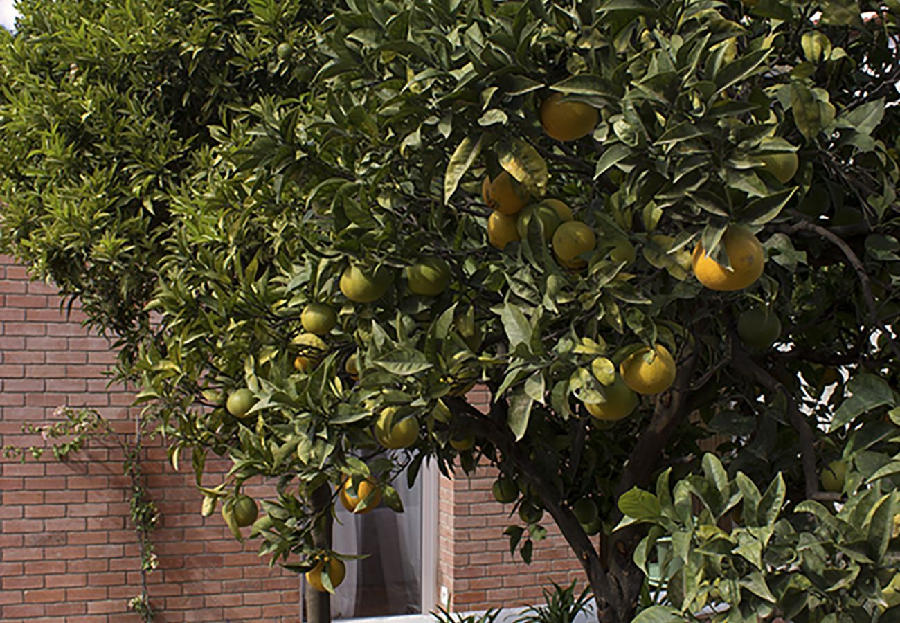 Lemon tree from the garden of the rental apartment for a stay in Lisbon